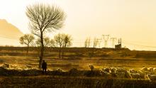 林地和耕地补偿标准